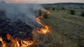 Пламена и дым лесного пожара в природе сток-видео