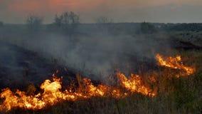Пламена и дым лесного пожара в природе видеоматериал