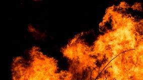 Пламена костра на черноте Стоковые Фото