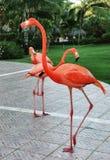 Пламенеющие фламингоы Стоковое фото RF