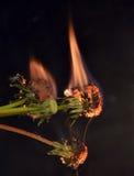 Пламенеющий завод Стоковое Фото
