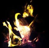 Пламенистое животное Стоковые Изображения RF