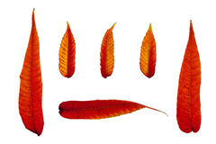 Пламенистые листья осени 2 Стоковое Изображение RF
