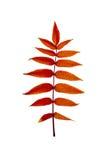 Пламенистые листья осени 3 Стоковая Фотография
