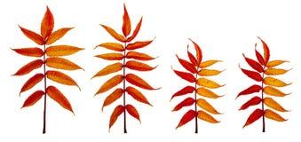 Пламенистые листья осени 4 Стоковые Изображения RF