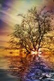 Пламенистый заход солнца на озере Стоковая Фотография RF