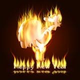 Пламенистый петух h Стоковая Фотография