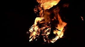 Пламя костра в ноче сток-видео