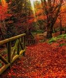 Пламя осени Стоковые Фото