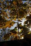 Пламя цвета листьев осени Стоковая Фотография