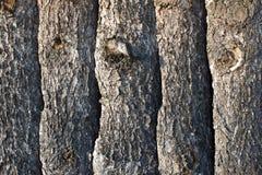 Планки сосновой древесины стоковые изображения rf