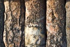 Планки сосновой древесины стоковые фотографии rf