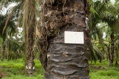 Плантации дерева пальмового масла в Борнео стоковые изображения rf