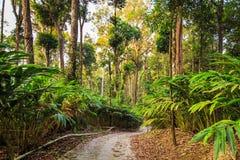 Плантации кардамона в гористых местностях Стоковое Изображение
