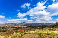 Плантации сливы в плато Moc Chau, Вьетнаме Стоковая Фотография