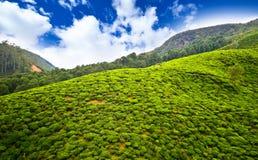 Плантации чая в Шри-Ланка Стоковые Изображения RF