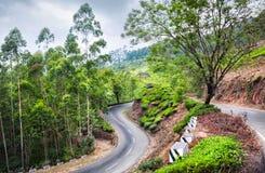 Плантации чая в Munnar стоковая фотография