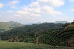 Плантации чая Стоковое фото RF