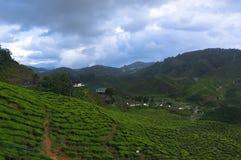 Плантации чая стоковая фотография