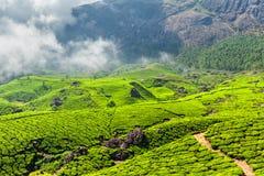 Плантации чая, Munnar, положение Кералы, Индия Стоковое Изображение
