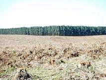 Плантация леса стоковая фотография