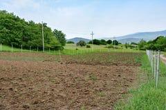 Плантация картошки и лука в поле Стоковая Фотография