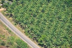Плантация масличной пальмы Стоковое Фото