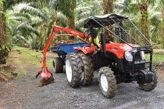 Плантация масличной пальмы Стоковые Изображения RF