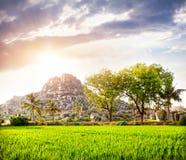 Плантация риса в Hampi стоковые фотографии rf