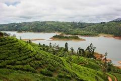 Плантация чая в Шри-Ланке, Nowember 2011 стоковое изображение