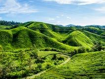 Плантация чая на зеленой горе Стоковое фото RF