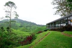 Плантация чая Boh, Sungai Palas Стоковые Изображения RF