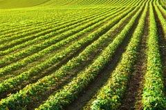 плантация Стоковая Фотография RF