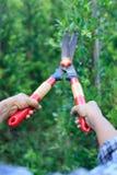 Планы утески садовника женщины Стоковое фото RF
