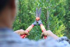 Планы утески садовника женщины Стоковые Фотографии RF