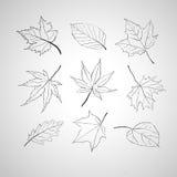 План листьев Стоковое фото RF