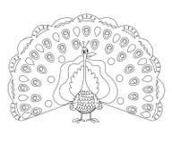 План страницы расцветки смешного павлина Стоковые Фото