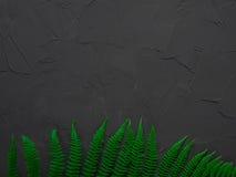План сделанный из зеленых листьев изолированная принципиальной схемой белизна природы Плоский состав положения для блоггеров, кас Стоковое Фото