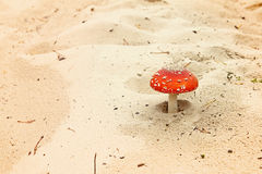 Пластинчатый гриб мухы в песках Стоковые Изображения RF