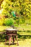 Пластичное качание в саде Стоковые Изображения
