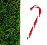 Пластичные трава и орнамент Стоковые Изображения RF