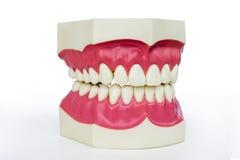 Пластичные dentures стоковые изображения rf