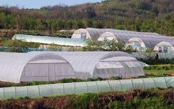 Пластичный сад Стоковые Изображения RF