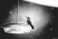 Пластичный фидер птицы с красным верхом Стоковое фото RF