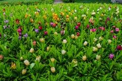 Пластичный цветок Стоковые Изображения RF