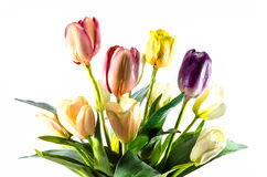 Пластичный цветок Стоковое фото RF