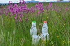 2 пластичных бутылки и чашки в луге Стоковое фото RF
