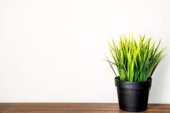 Пластмасса травы в баке Стоковые Фото