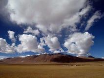 Плато Тибета Стоковое Фото