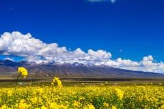 Плато Тибета стоковое изображение
